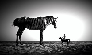 picking soursop dream